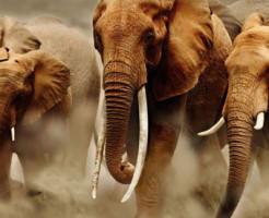 health of elephant